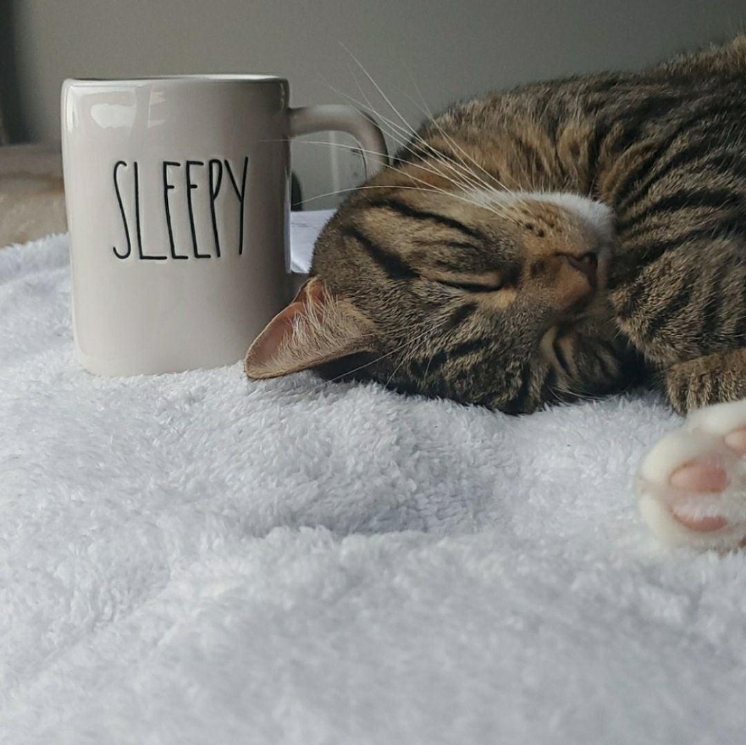Rea Dunn sleepy Mug