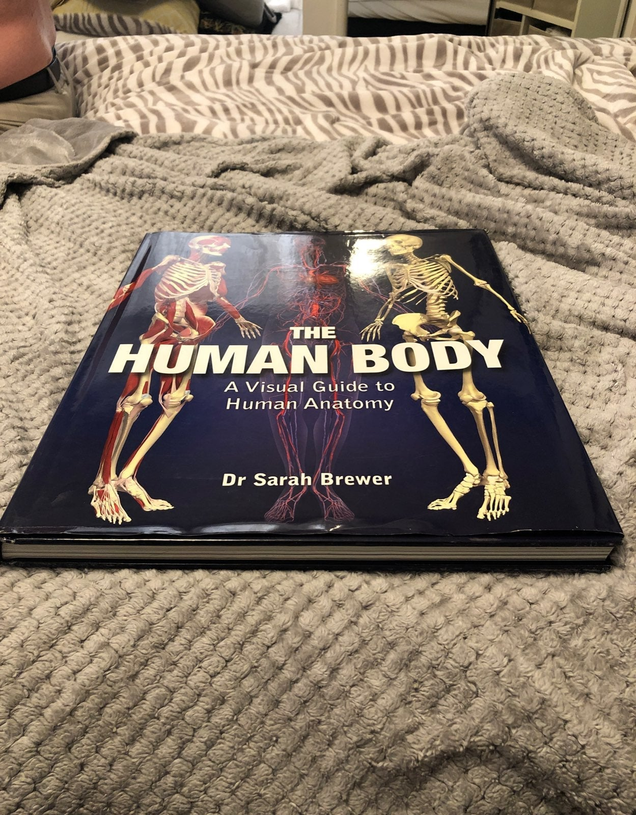 The Human Body A Visual Guide to Human A