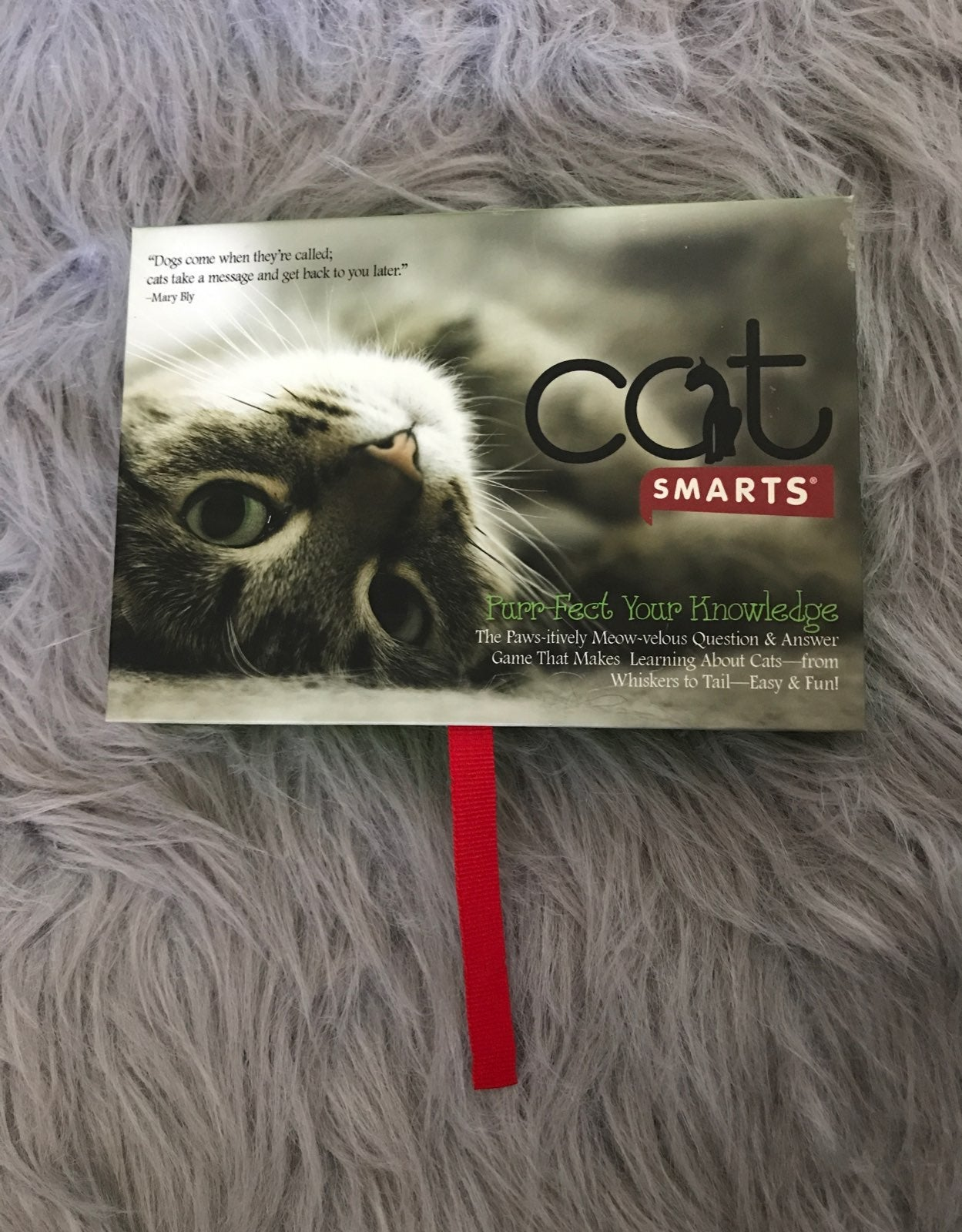 Cat Flash Cards/Game