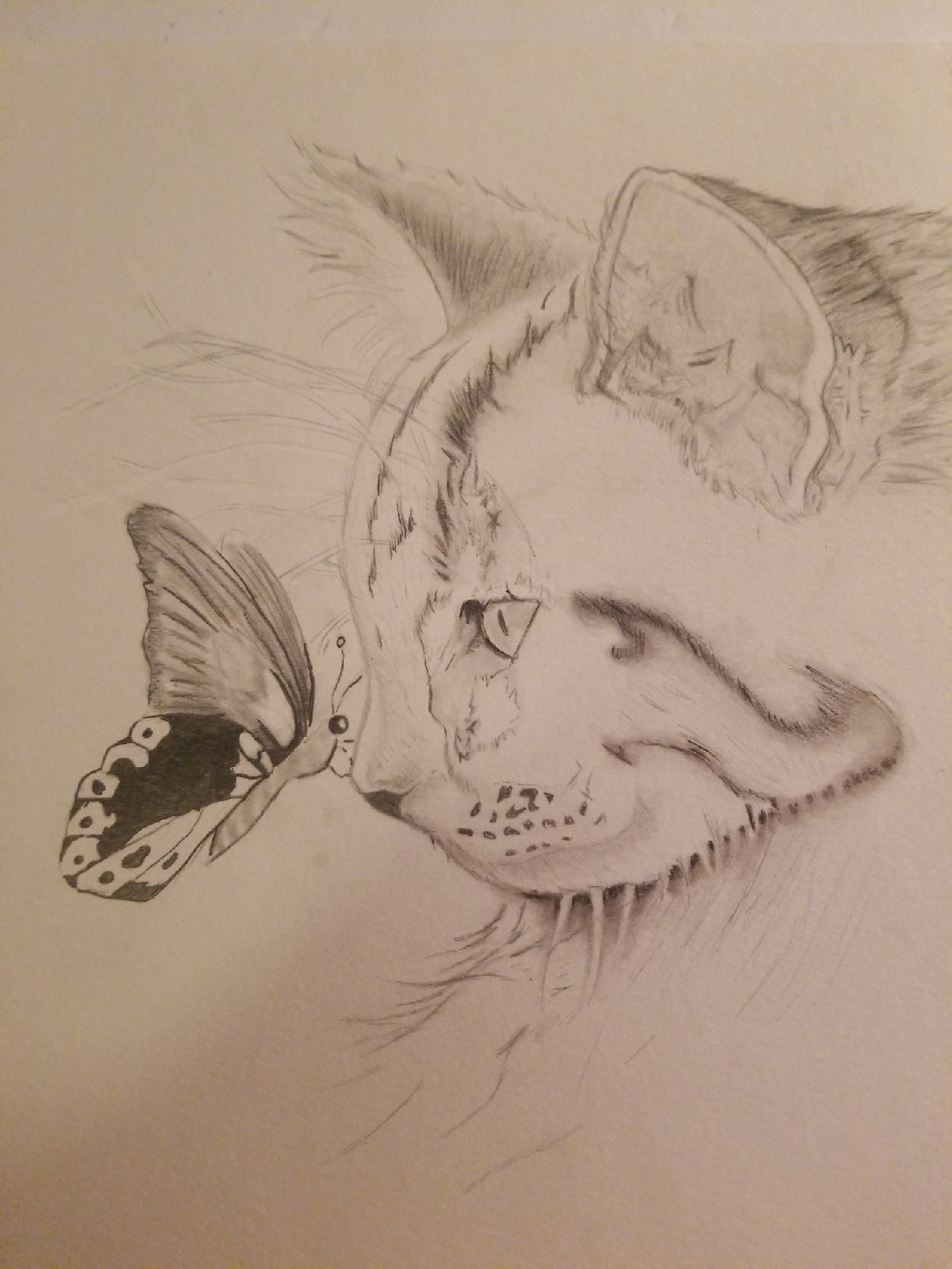 Cat butterfly pencil prismacolor art