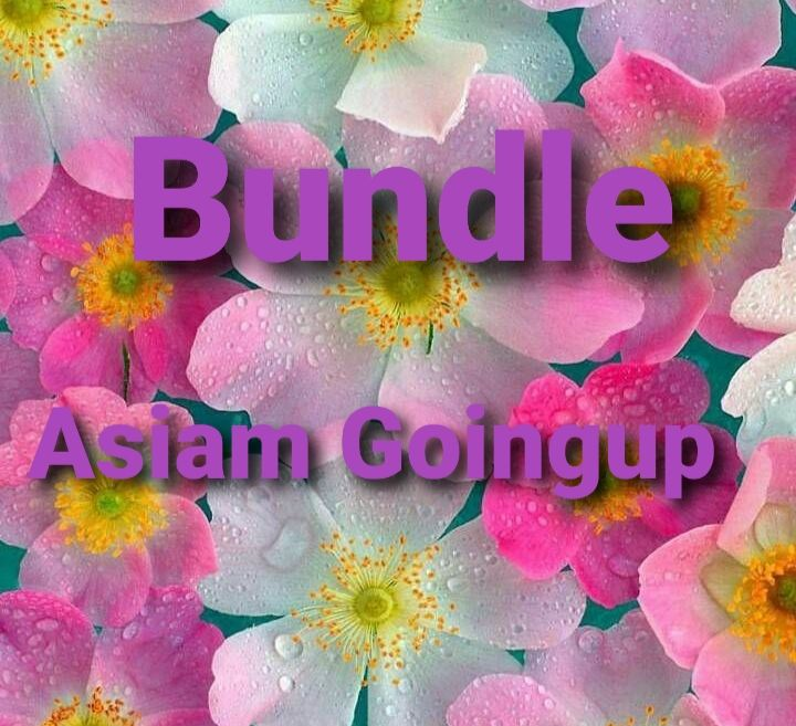 BUNDLE ASIAM Goimgup 500 tips clear