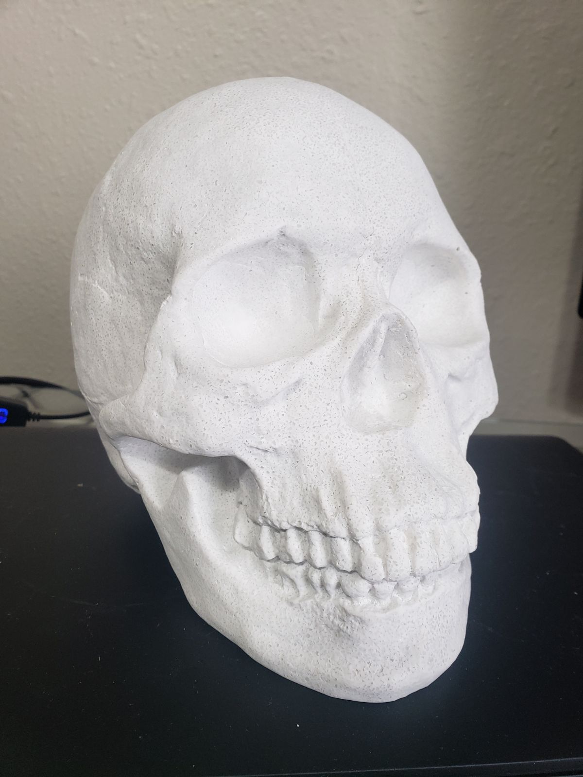 Life sized resin skull Halloween