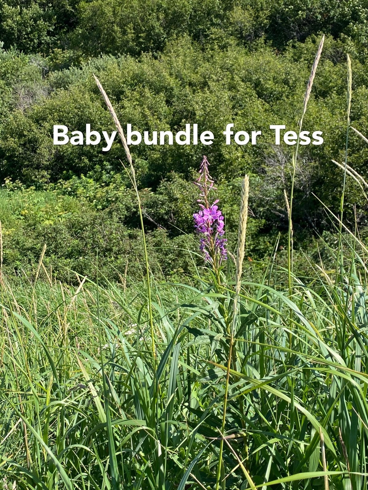 Private bundle for Tess