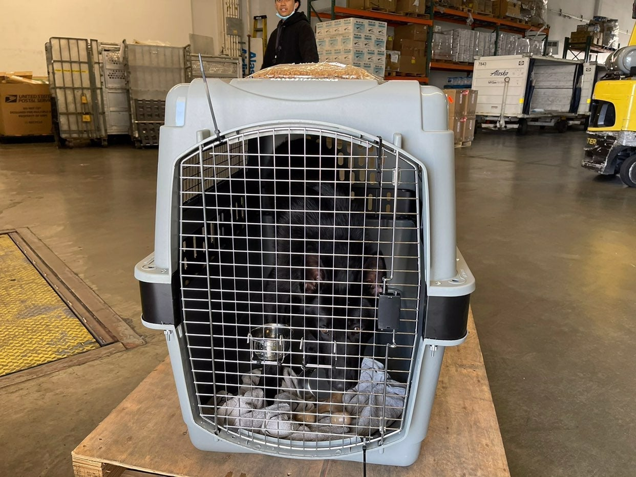 Petmate Sky Kennel Dog Crate 500