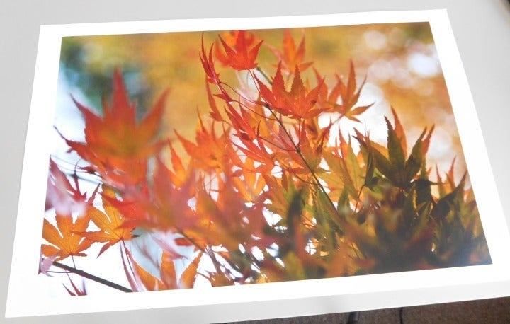 Maple Leaf Branch Color Photo Wall Art
