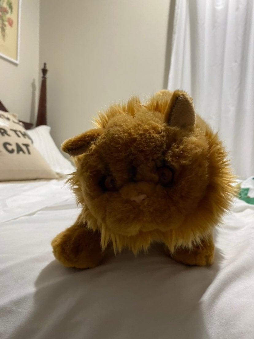 Crookshanks cat