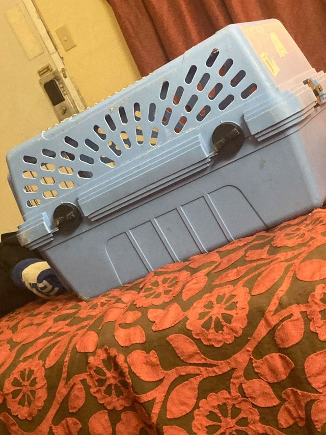 Cat kennel. Will fit two at most.