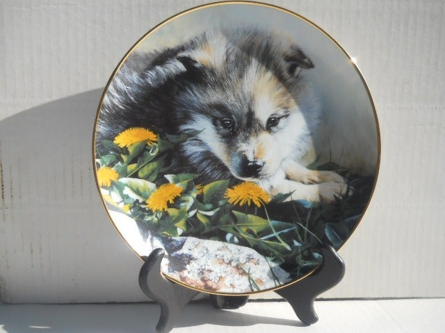 Wolf Pups Collector Plate Young Faces of