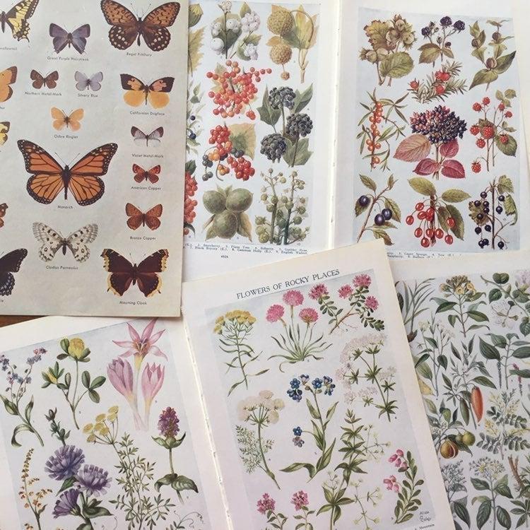 ephemera , botanical , butterflies , lot