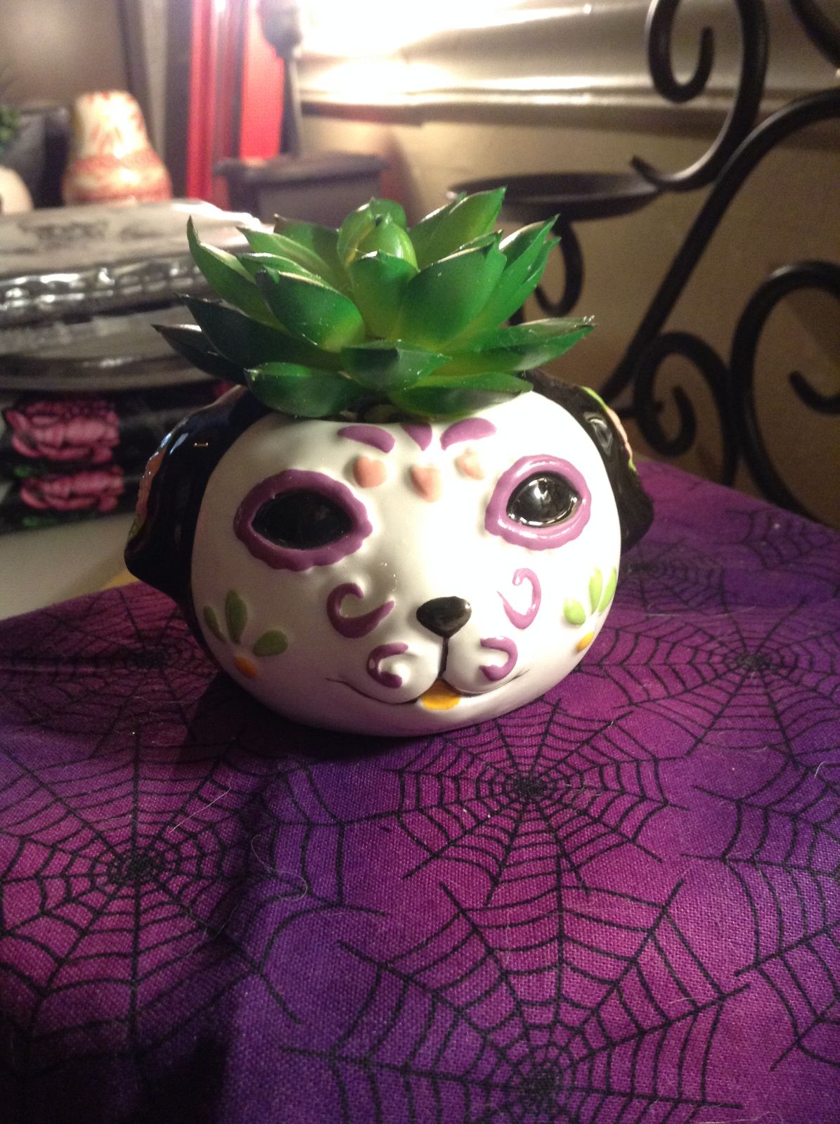Day of the dead plant