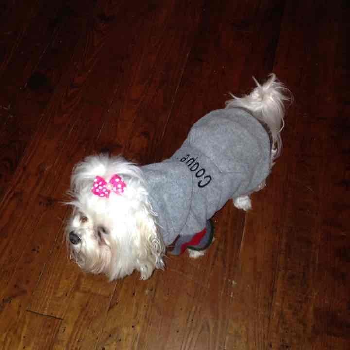 Hooded monogrammed dog coat