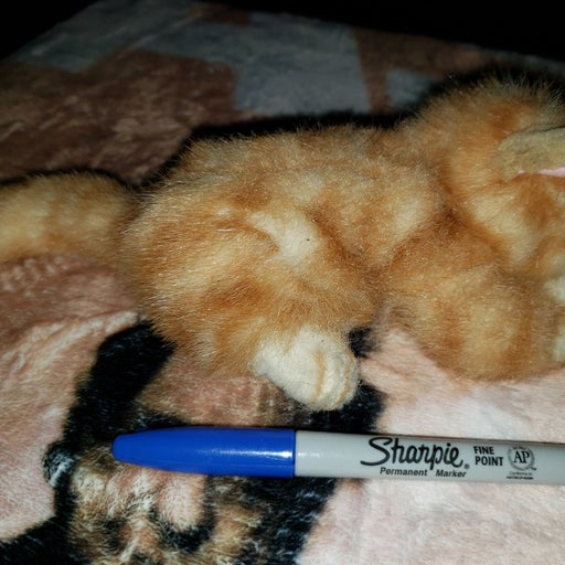 Russ: peaches tabby sleeping cat