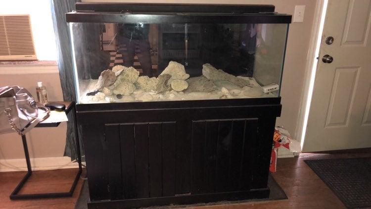 75 Gallon Salt Water Fish Tank Set Up