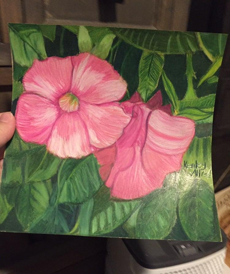 "Pink Mandevilla Flower Drawing 8""x8"""