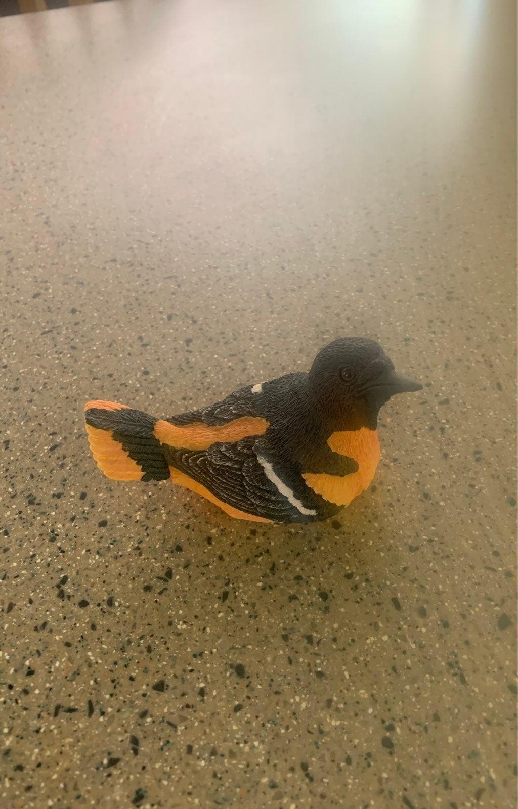 Backyard birds Baltimore oriole