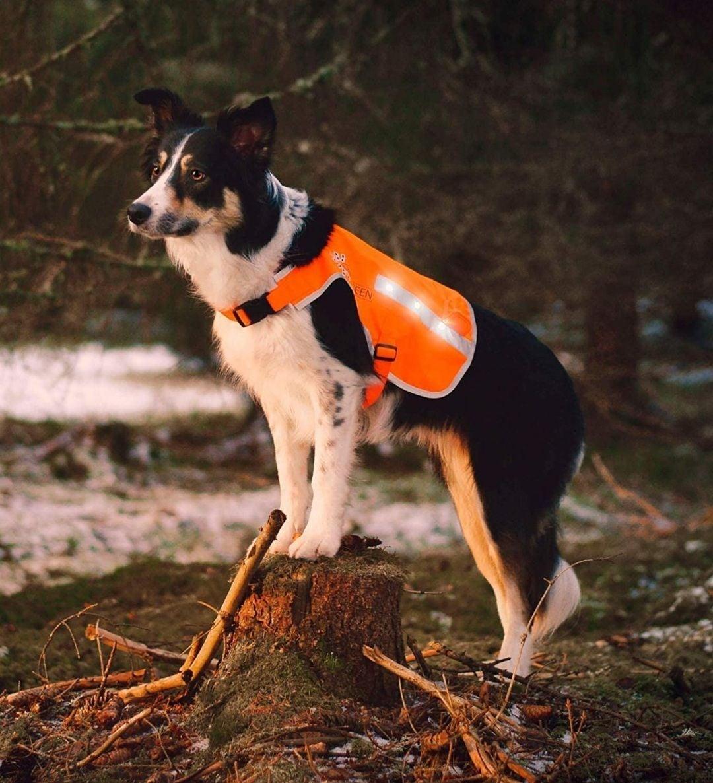 Dog Vest - Illumiseen rechargeable LED