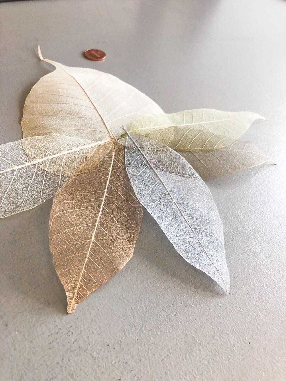Leaves Skeleton