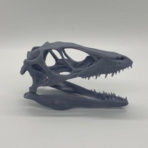 Dinosaur raptor skull replica