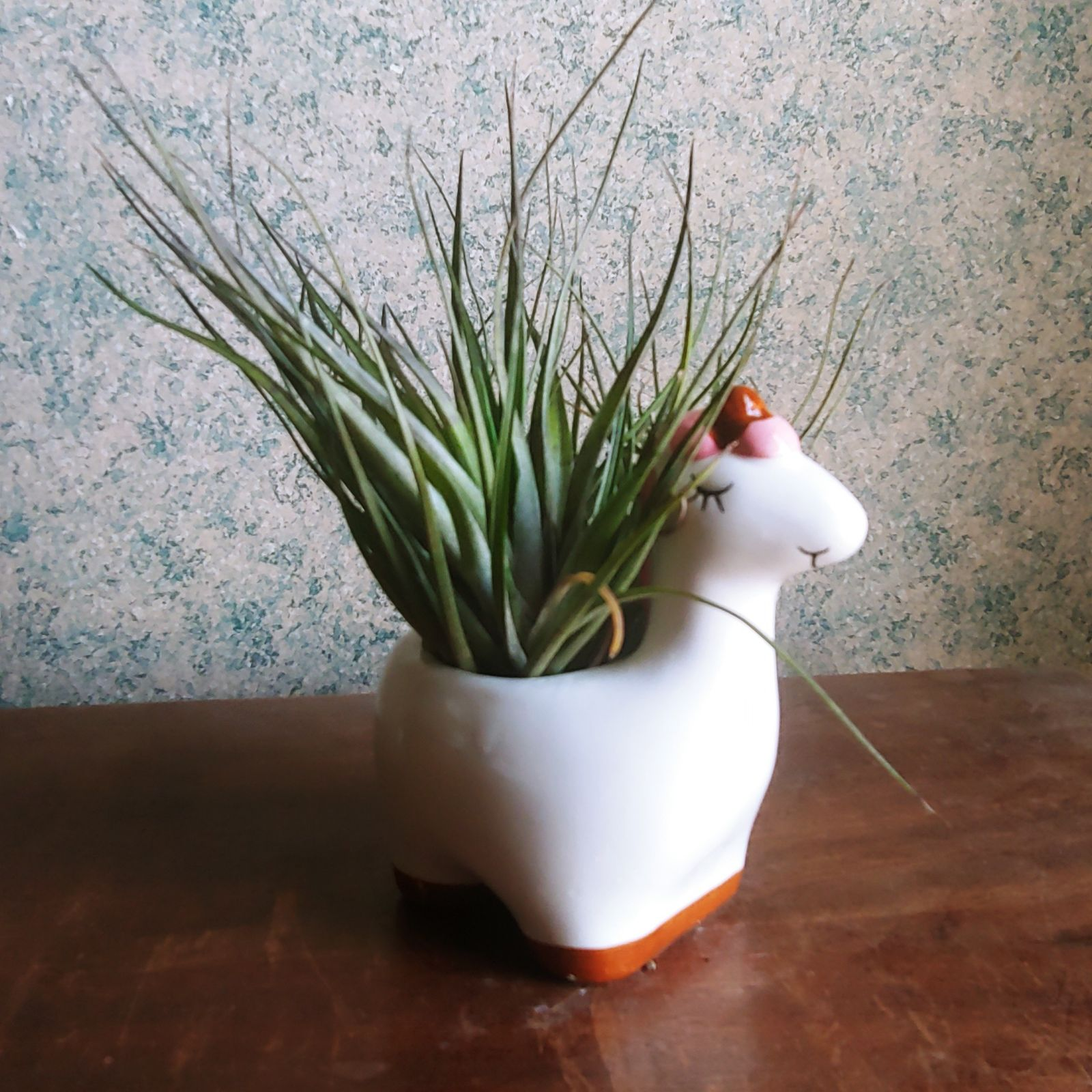 Cute planter with large Airplant