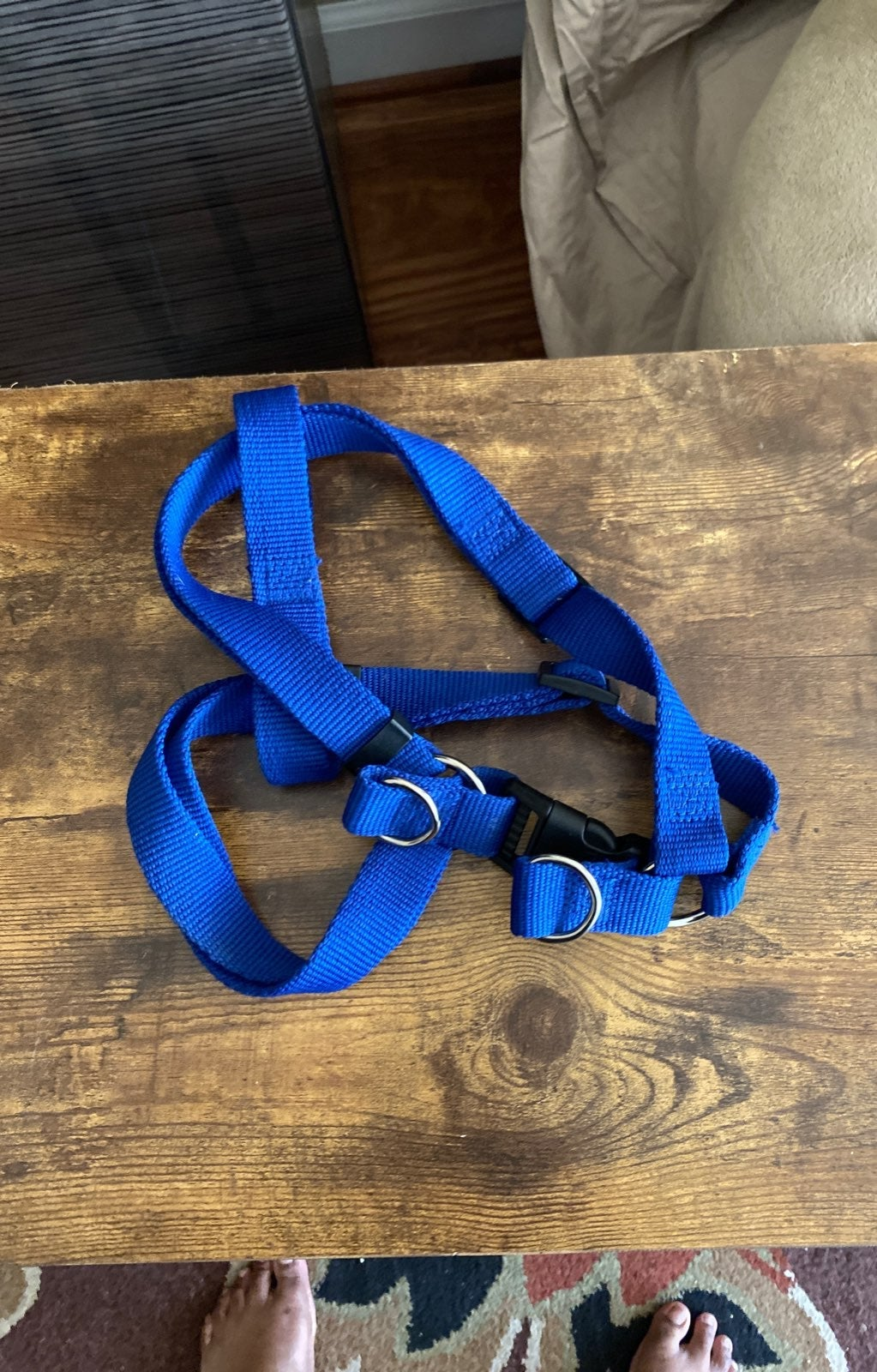 Blur harness for puppies or small dogs