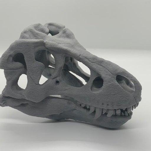 Dinosaur T-rex skull