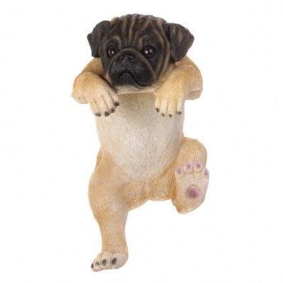 Climbing pug pup