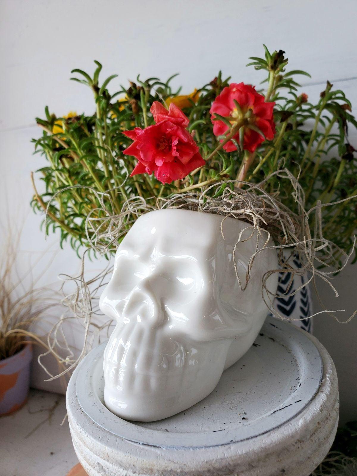 Ceramic Skull Planter & Live Air Plant