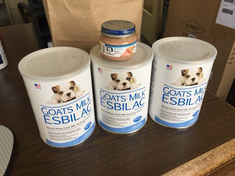 Goat Milk Esbilac For Puppies / PetAg