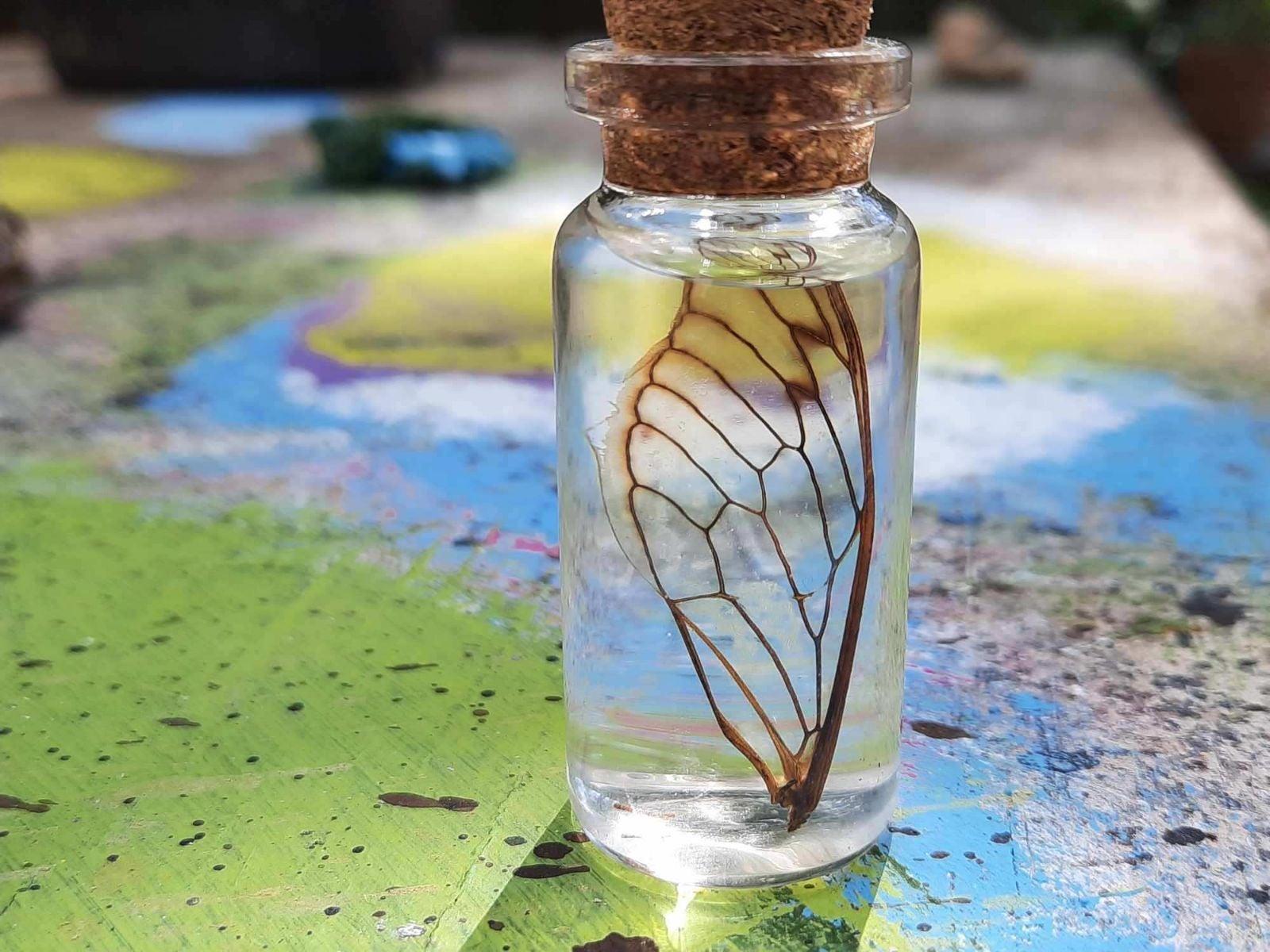Fairy Wing In A Bottle