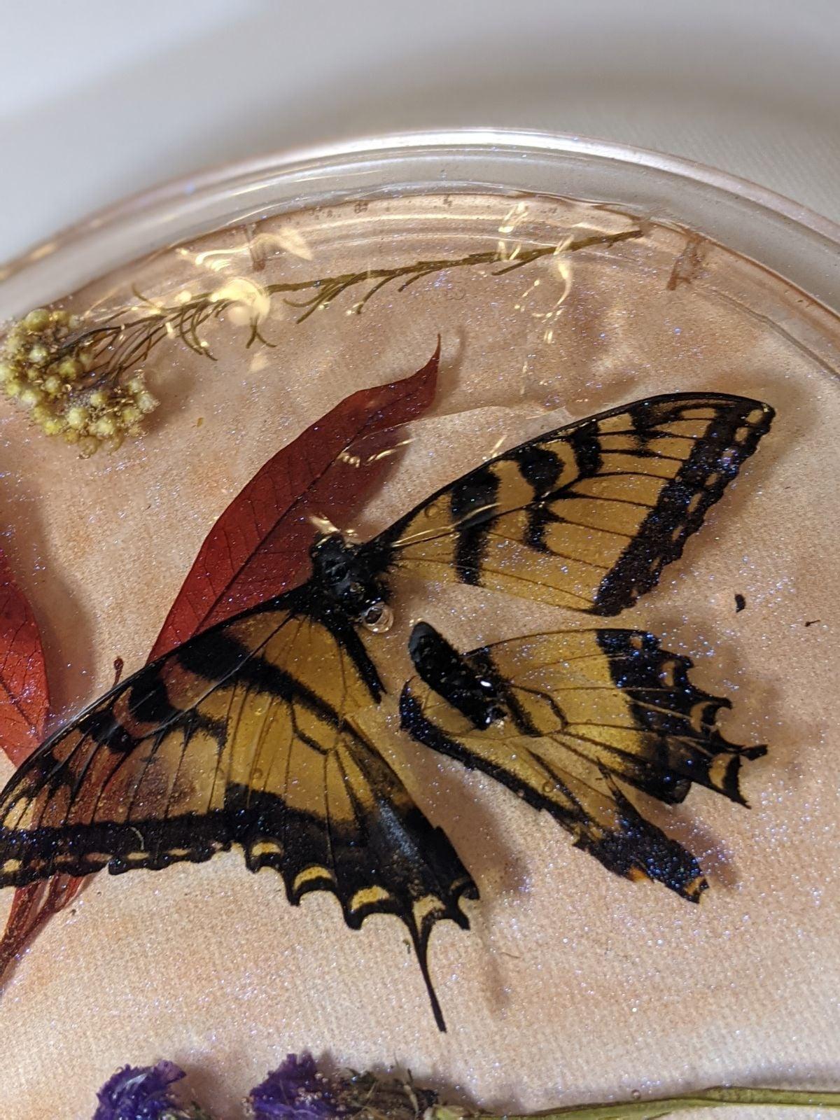 """The Broken Butterfly"" Analogy Resin Art"