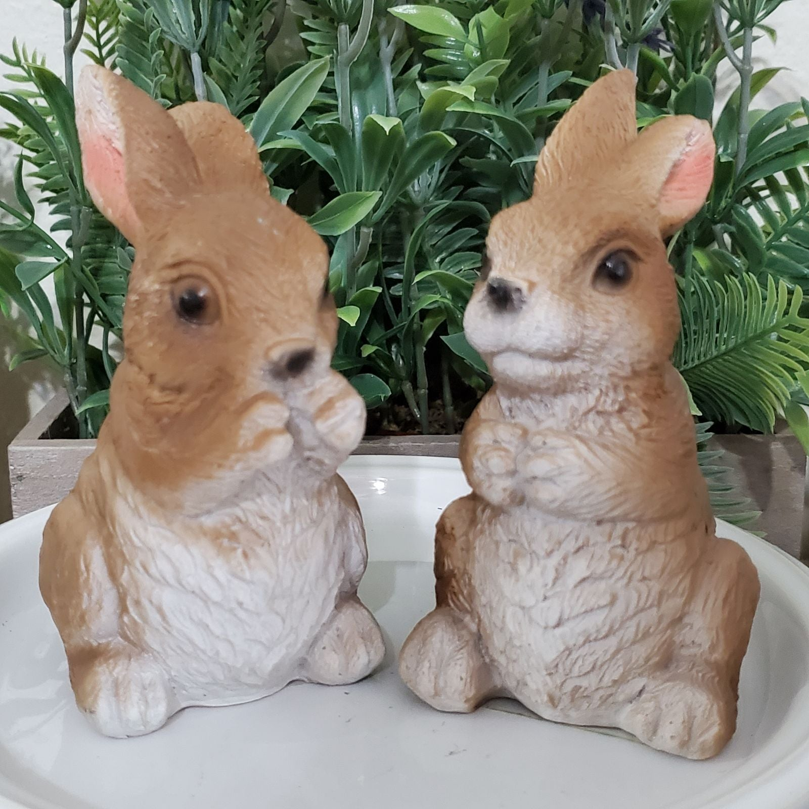 Adorable pair of bunnies