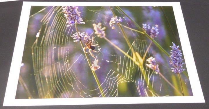 Spider's Web on Lavender Plant Wall Art