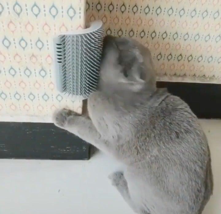 Cat Massage Brush Pet Cat Brush Corner