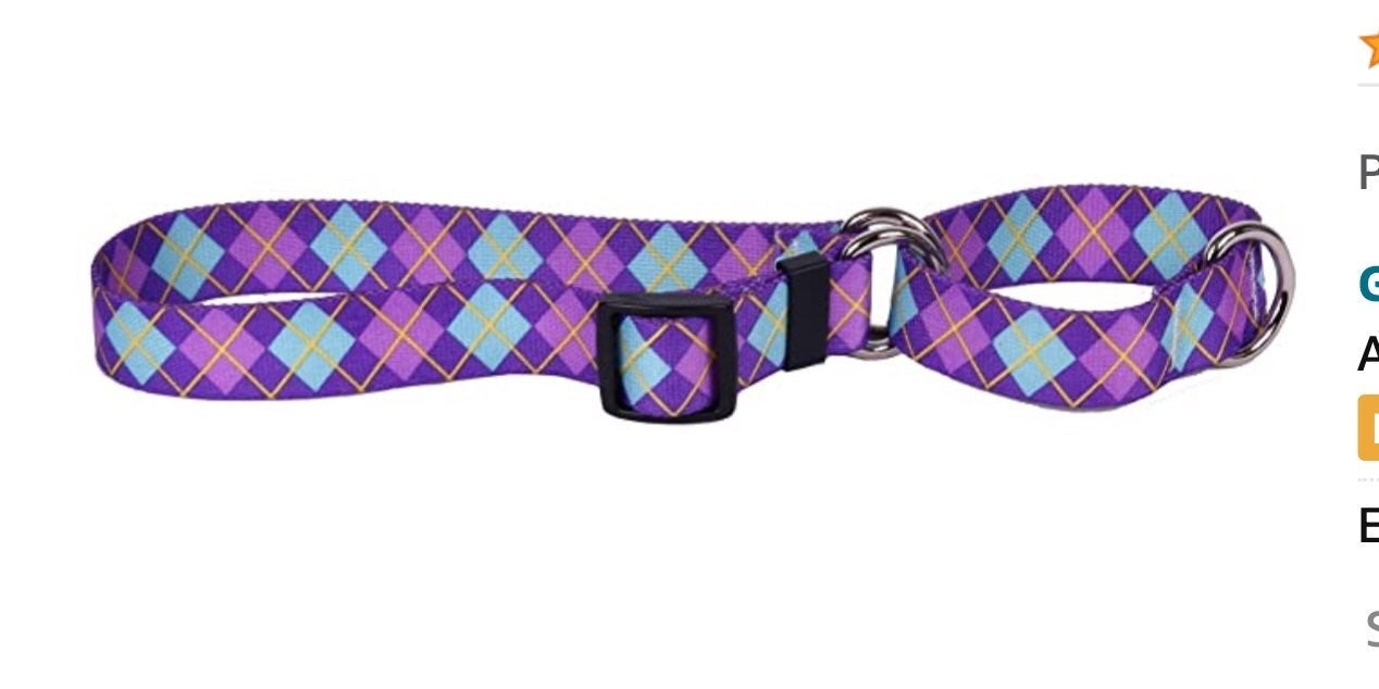 Martingale Dog Collar Yellow Dog Design